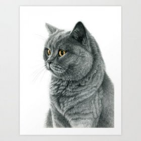 The chartreux portrait