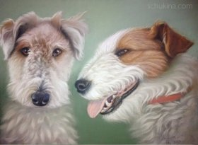 Fox terriers couple